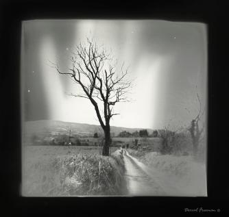 35mm FIlm Partially solarised during darkroom processing
