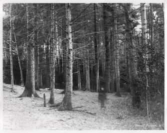35mm Film Long Exposure