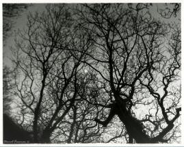 Moon 35mm Film